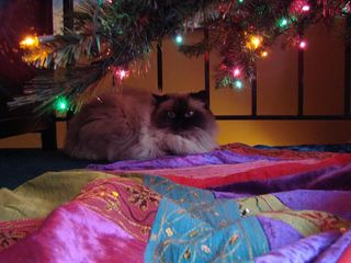 Magnolia under tree