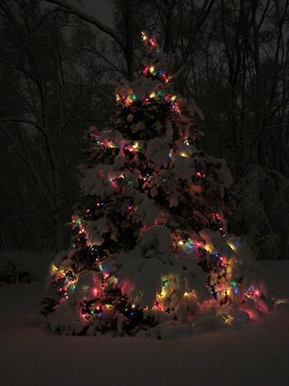 Snowtree - Copy