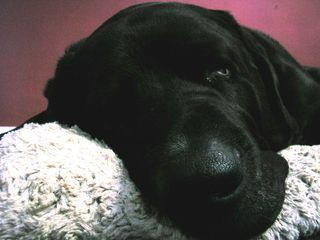Cooper's nose2