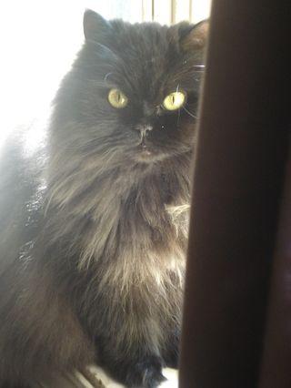 Maddie by window