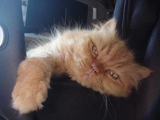 Lazy Frank