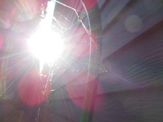 Sun web 1