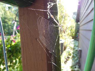 Sun web 2