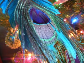 Peacock feather - Copy