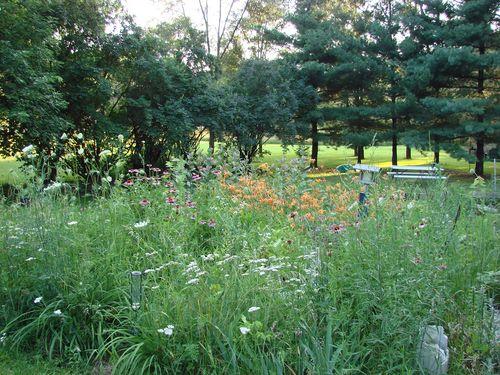 Untamed garden 2