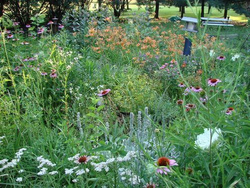 Untamed garden 1