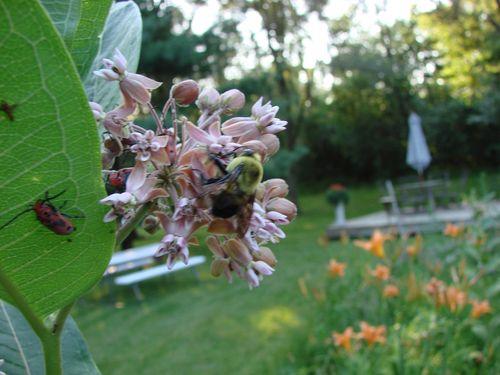 Untamed garden 5