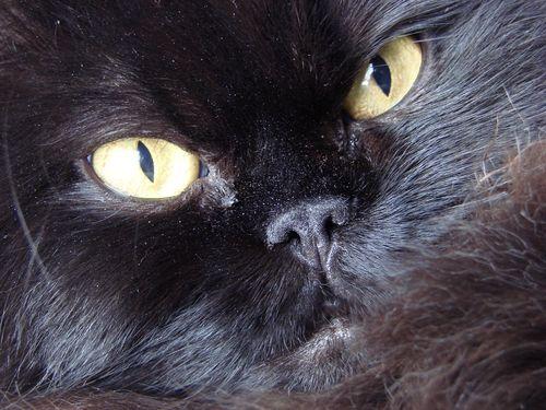 Miss maddie close up