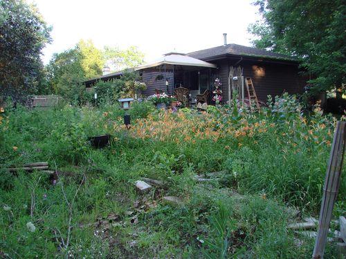 Untamed garden 3