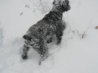 Sam snow