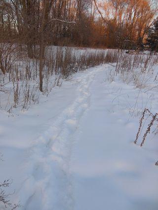 Path behind