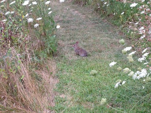 Stones bunny