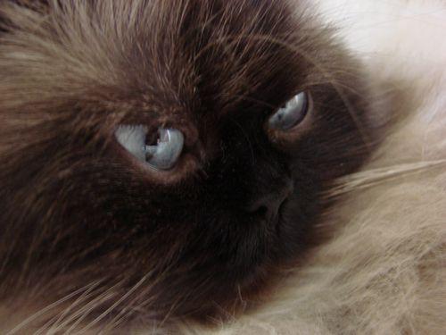 Eyes noli